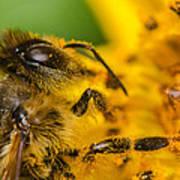Bee At Work Art Print
