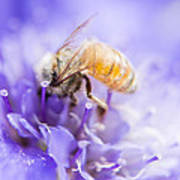 Bee Dream Art Print