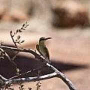 Bee-eater V15 Art Print