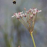 Bee Gone Art Print