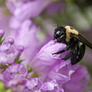 Bee Hug Art Print