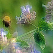 Bee In Catmint Art Print