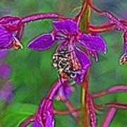 Bee In Hdr Art Print