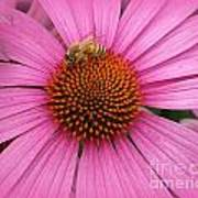 Bee In The Pink Art Print