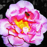 Bee Landing Art Print