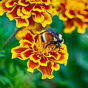 Bee My Friend Miss Marigold Art Print
