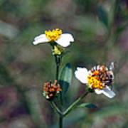 Bee- Nectar Art Print