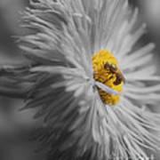 Bee On Daisy Flower Art Print