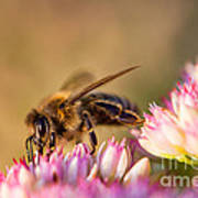 Bee Sitting On Flower Art Print