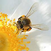 Bee-u-tiful Squared Art Print