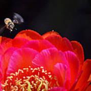 Bee Uti Full Art Print