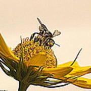 Bee Utiful Day Art Print