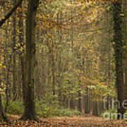 Beech Wood Walk Art Print