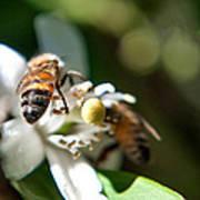 Bee's Art Print