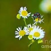 Beetle Life Art Print