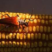 Beetle On Corn Ear Art Print