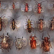 Beetles - The Usual Suspects  Art Print by Mike Savad