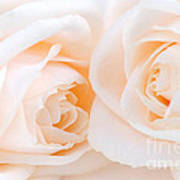 Beige Roses Art Print by Elena Elisseeva