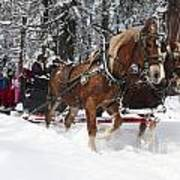 Belgian Draft Horses Pulls A Sleigh In Yosemite National Park Art Print
