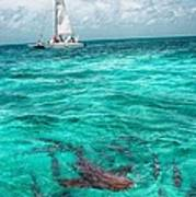 Belize Turquoise Shark N Sail  Art Print