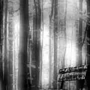 Bench In Michigan Woods Art Print