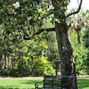 Bench Under The Magnolia Tree Art Print