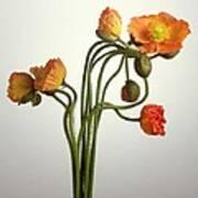Bendy Poppies Art Print