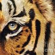 Bengal Tiger Face Art Print