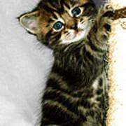 Benny The Kitten Playing Art Print
