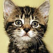 Benny The Pussy Cat Art Print