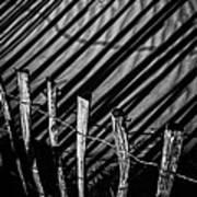 Benone - Shadow Fencing Art Print
