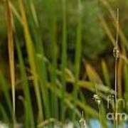 Bent Grass Variation In Nature Art Print