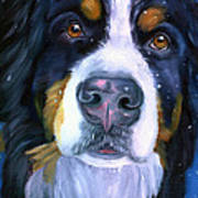 Bernese Mountain Dog In Snowfall Art Print by Lyn Cook