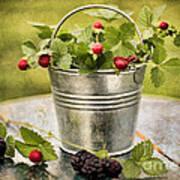 Berries Art Print by Darren Fisher