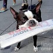 Betty The News Dog Art Print