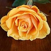 Betty's Rose Art Print