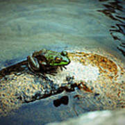 Between A Frog And A Hard Place Art Print