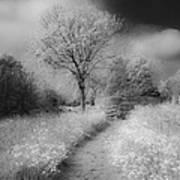Between Black And White-23 Art Print