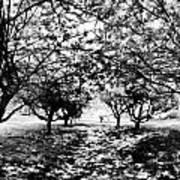 Between Trees II Art Print
