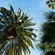 Beverly Palms Art Print
