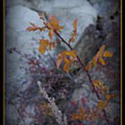 Beware The Thorns Art Print