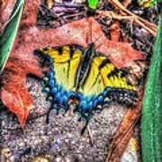 Beyond Chrysalis-tiger Swallowtail Art Print