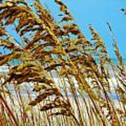 Beyond The Sea Oats Lies Eternity Art Print by Lorraine Heath