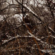 Beyond The Thicket - Abandoned Art Print