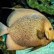 Big Beautiful Fish Art Print