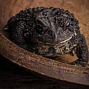 Big Black Toad Art Print