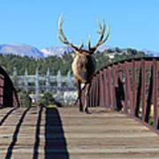 Big Bull On The Bridge Art Print