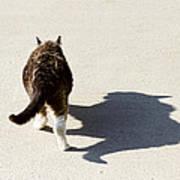 Big Cat Ferocious Shadow Art Print by James BO  Insogna
