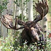 Big Daddy The Moose 3 Art Print