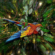 Big Glider Macaw Digital Art Art Print
